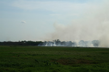 Wild fire in the Pantanal
