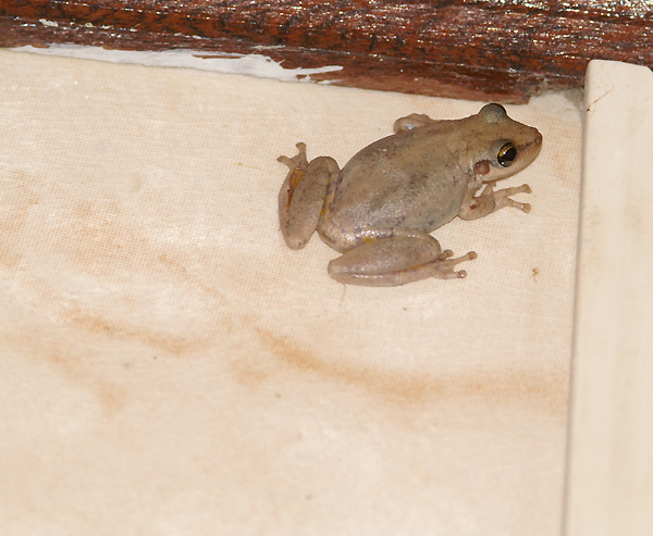 Little frog in the bathroom