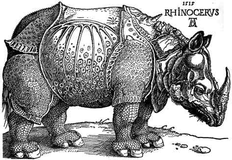 Rhinocéros dessiné par Albrecht Dürer en 1515