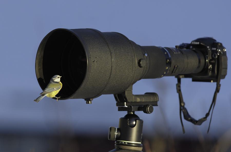 Bird and lens