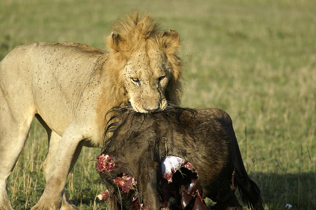 _dsc1234w_lion
