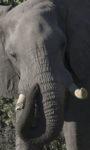 _DSC9922w - Éléphant
