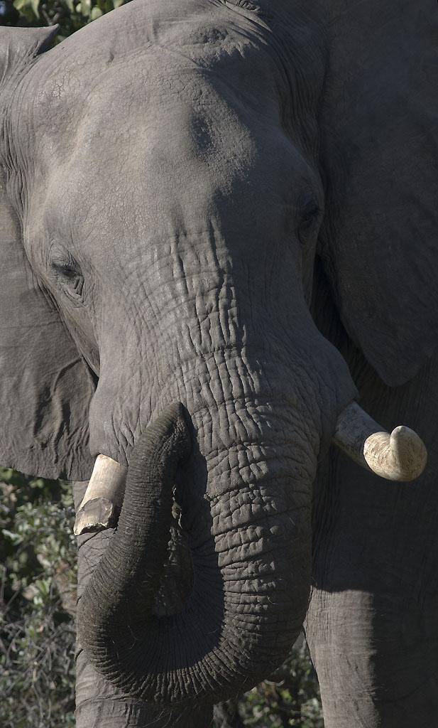 _DSC9922w - Elephant