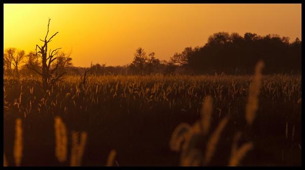 Botswana landscapes