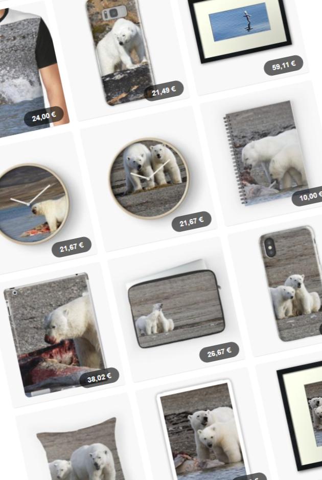 Polar bears – Prints