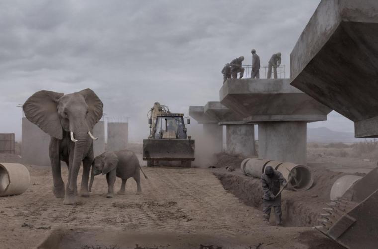 Elephants and bridge construction, Nick Brandt