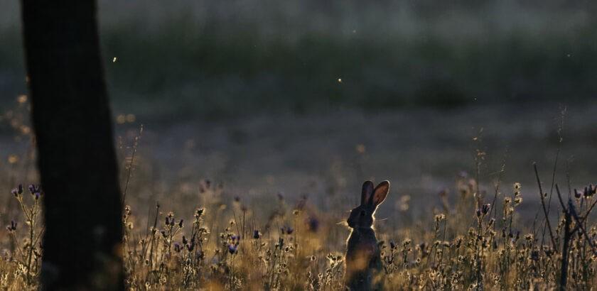 Rabbit in the Spanish sun