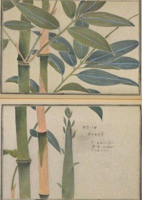 Museum at the University of Tokyo: honzo database
