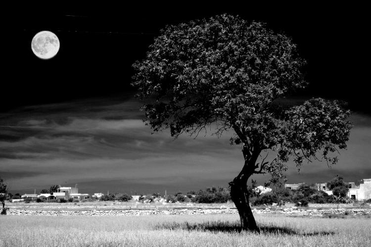 Tree under moonlight