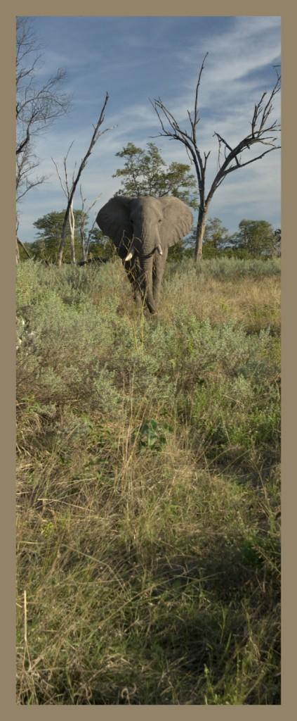 _DSC0158w - Elephant [panorama]