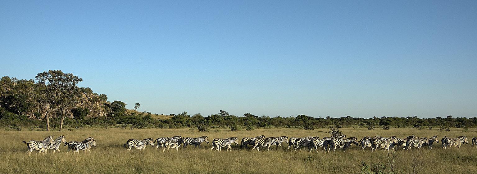 _DSC9188w - Zebres [panorama]