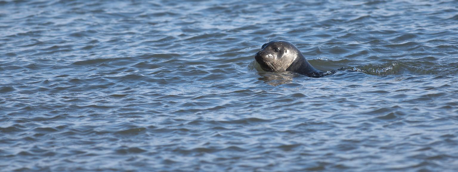 Svalbard : un phoque
