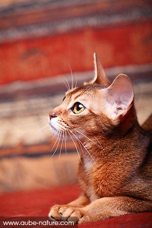 Les chats d'Aube Nature