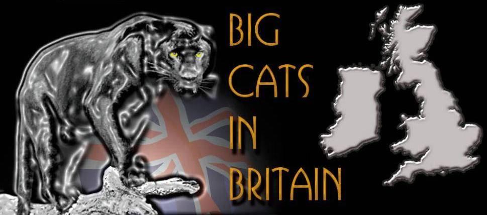 Grands félins en liberté au Royaume Uni