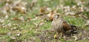 Photos d'oiseaux à Vincennes