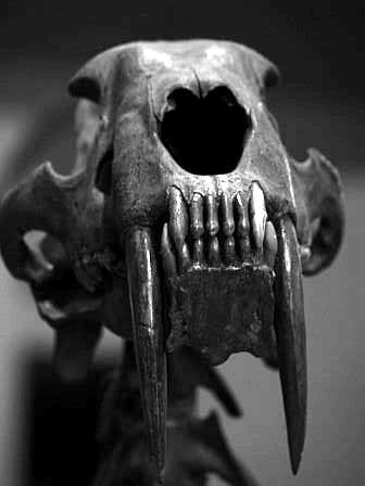 Les dents de la terre