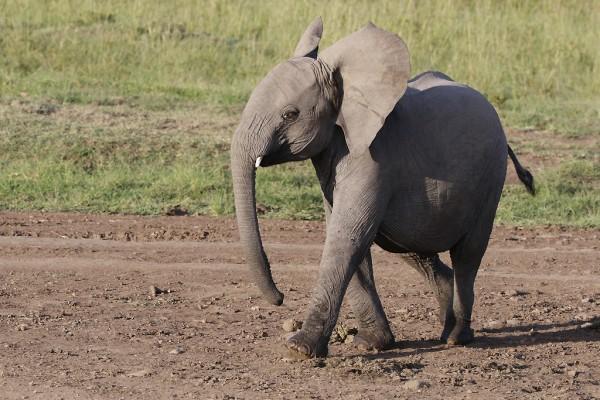 Bébés éléphants