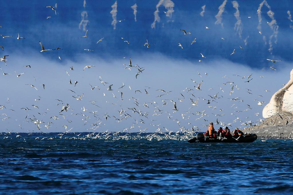 Oiseaux à Prince Leopold Island 2/3