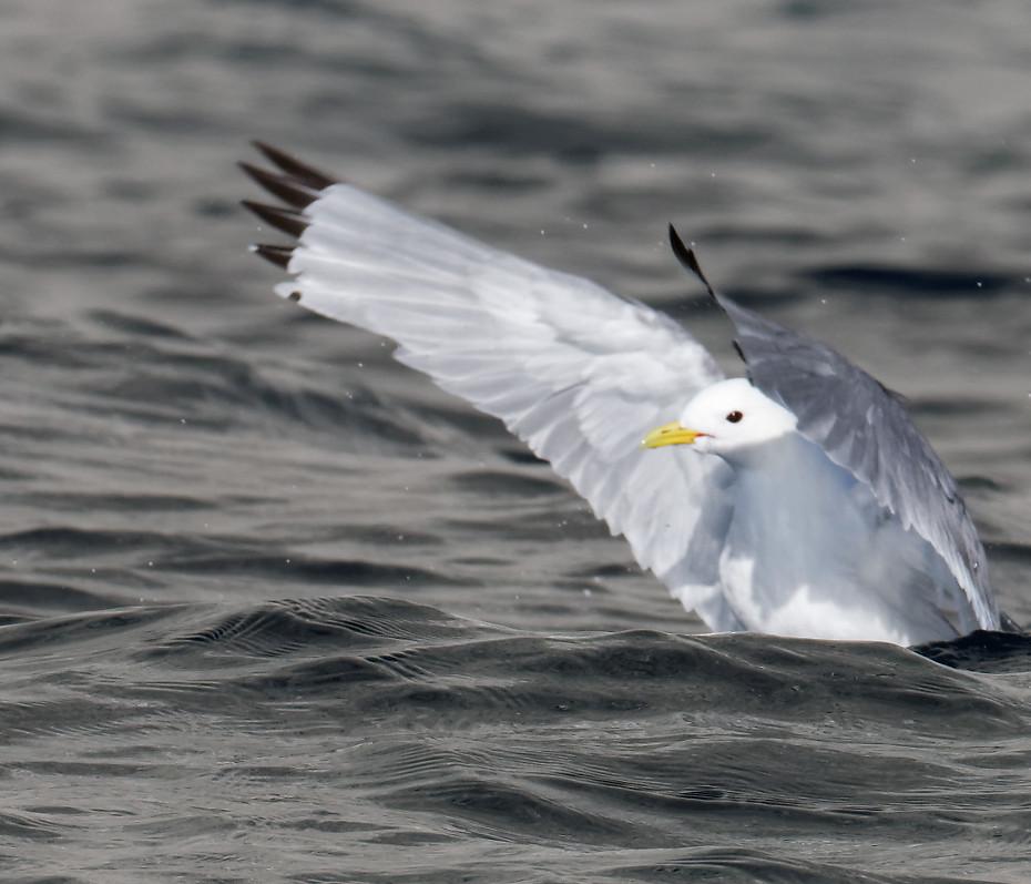 Oiseaux à Prince Leopold Island 3/3