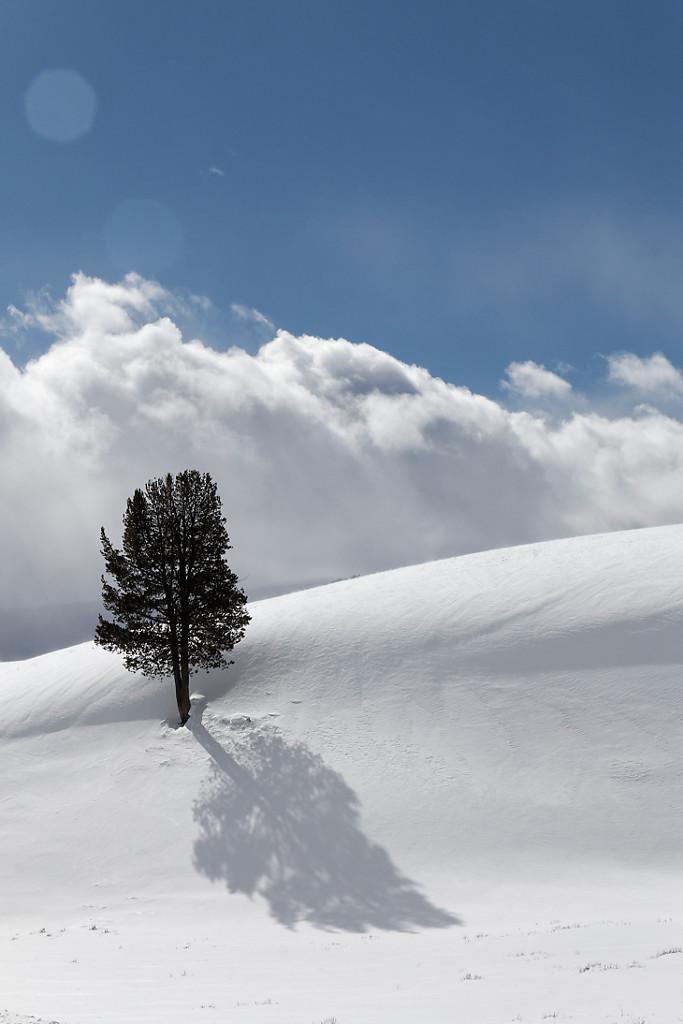 Paysages hivernaux du Yellowstone