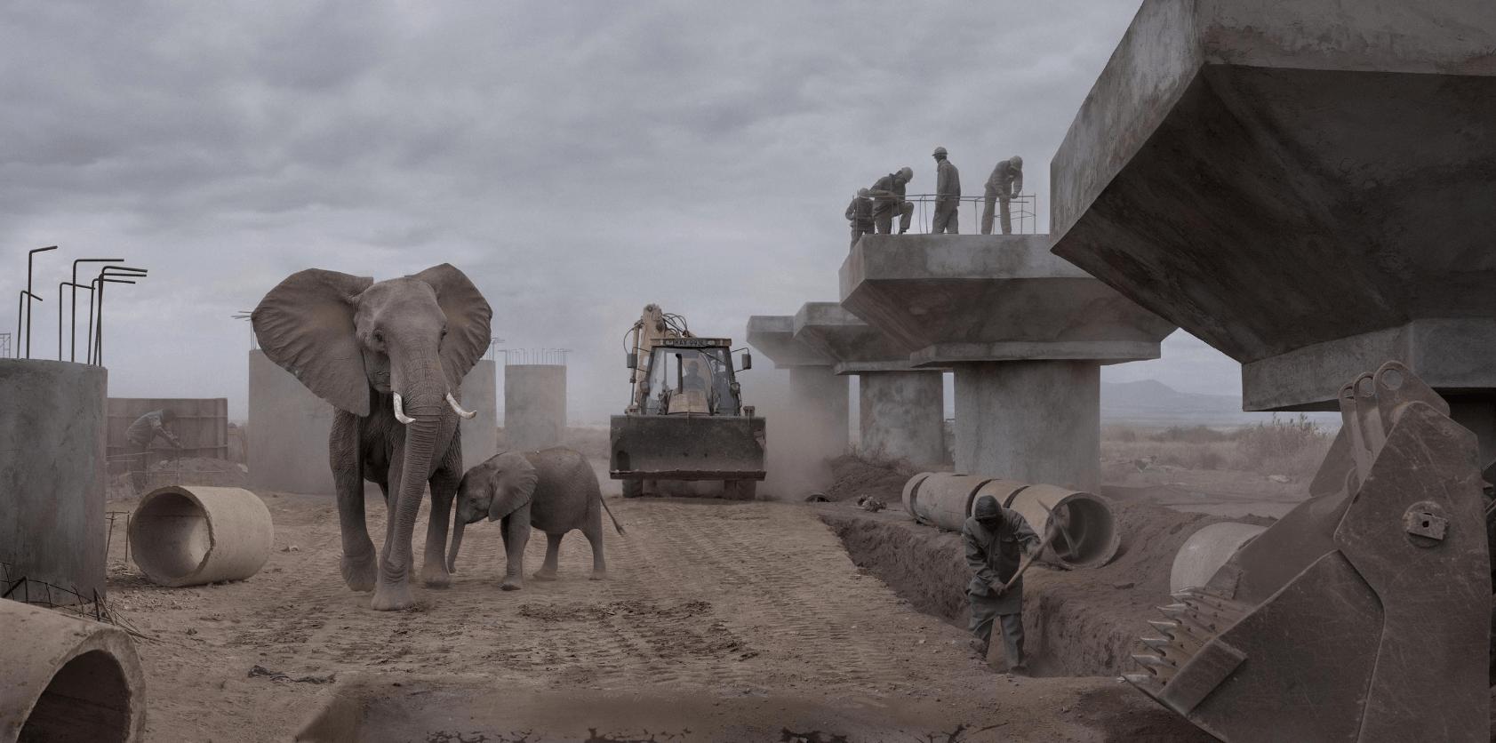 Photographier le conflit homme-animal en Afrique