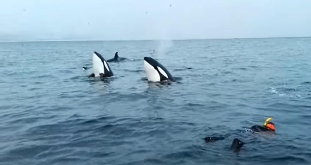 Orques, vidéos à partager