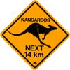 Kangourous à Rambouillet